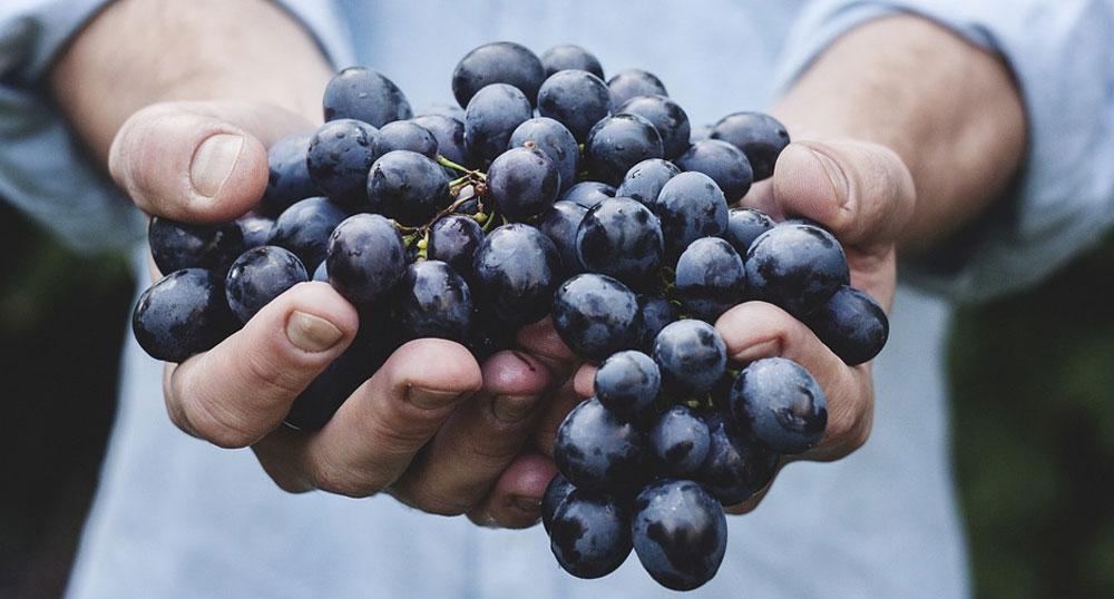 Organik ürünlerin ulaşılabilirliği Organik Tarım Kanunu kuralları gereğince ne yazık ki çok yaygın değildir.